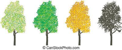 træ, hos, fire sæsoner