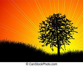 træ, hos, solnedgang