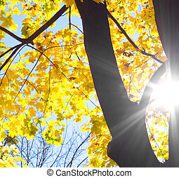 træ, imod, silhuet, sol