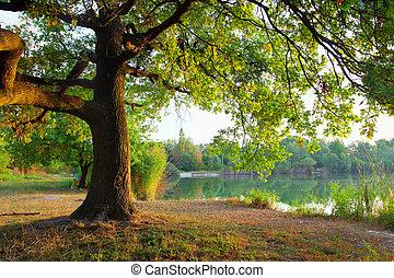 træ, ind, sommer, forest.