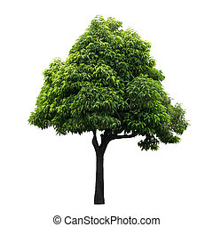 træ, isoleret, på hvide