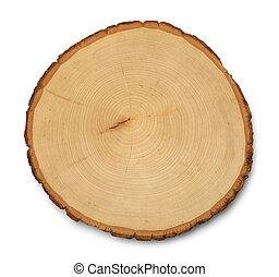 træ, kors sektion