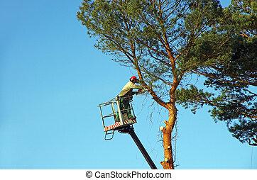 træ, lopper