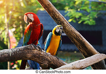 træ, macaw, fugl, farverig, branch.