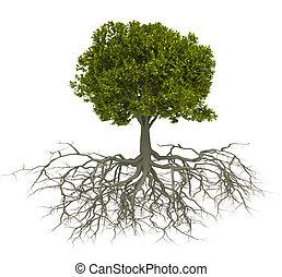træ, og, rod