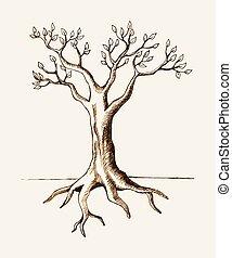 træ rod