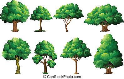 træ, sæt
