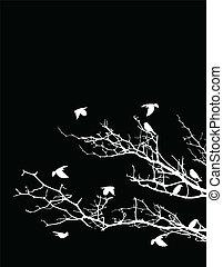 træ, silhuet, fugle