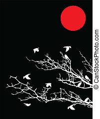 træ, silhuet, fugle, måne