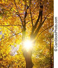 træ, silhuet, imod, sol