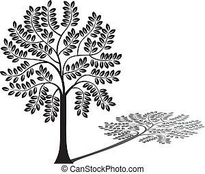træ, silhuet, og, skygge