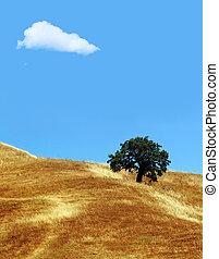 træ, sky