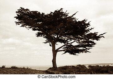 træ, strand