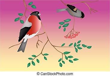 træ., twilight., vector., fugle