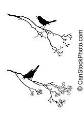 træ, vektor, silhuet, fugl, branch
