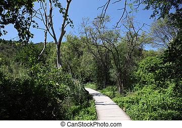 træagtig sti, ind, krka, national parker, croatia