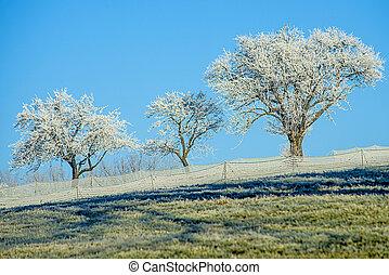 træer, hos, is krystaller