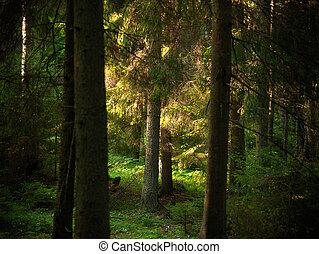 træer, ind, aftenen, lys