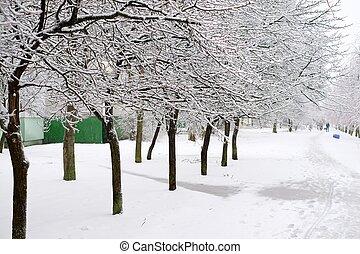 træer, ind, den, is