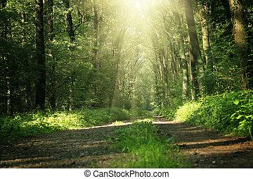 træer, ind, en, sommer, skov, under, bri