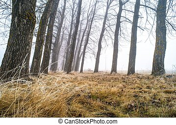 træer, ind, tåge
