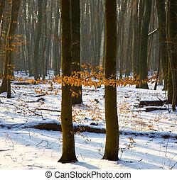 træer, ind, vinter