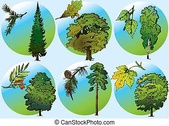 træer, og, foliage.