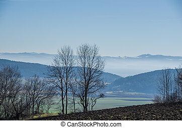 træer, og, tåge, ind, vinter