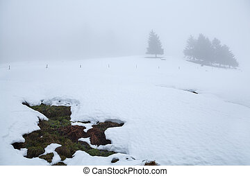 træer, på, høj, ind, vinter, tåge