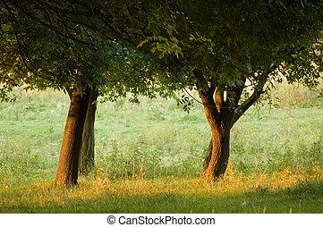 træer, park