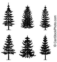 træer, samling, fyrre