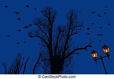 træer, silhuetter, aftenen