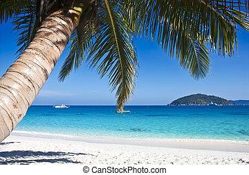 træer, tropisk, sand, håndflade, hvid strand