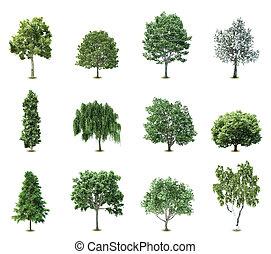 træer., vektor, sæt