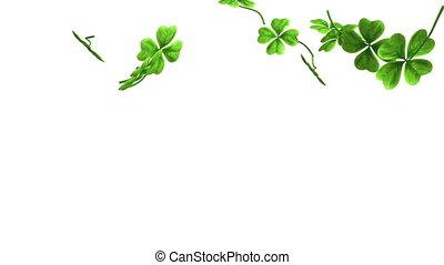 trèfle, feuilles chute, métrage