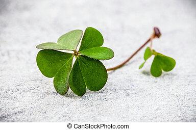 trèfle, pierre, feuille, troisième, foi, espoir, amour, feuilles, symbolique, shamrocks, quatre, seconde, trèfles, quatrième, .the, luck., rêves, premier