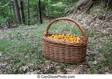 très, champignons, entiers, jour, bon, forêt