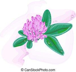 trébol, flower., pintura de acuarela
