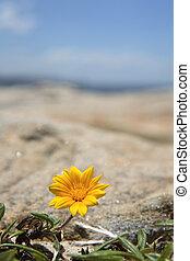 trésor, fleur