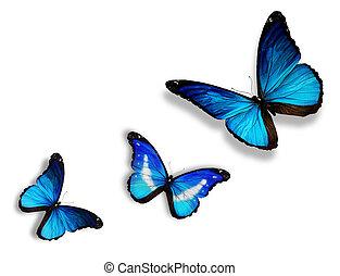 três, azul, borboletas, isolado, branco