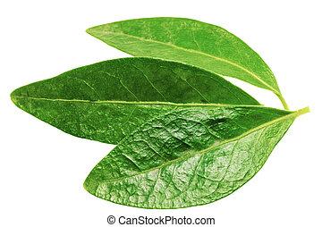 três, fundo, isolado, branca, folha verde