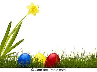 três, ovos páscoa, em, capim, com, um, narciso, com, fundo branco