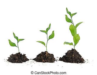 três, plantas, em, solo