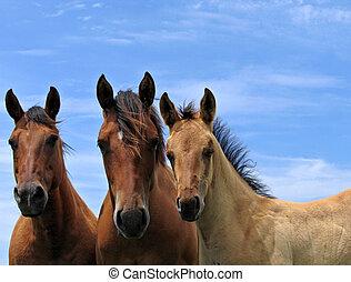 três quarto, cavalos