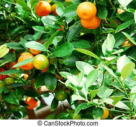 trópico, fruta