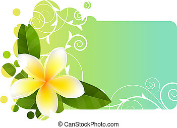 trópico, ilumine azul, bandeira, com, frangipani