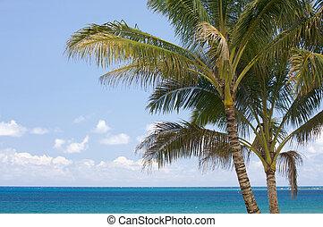 trópicos, árboles de palma