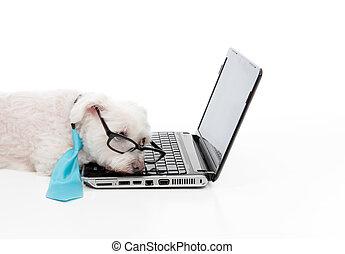 trött, eller, tröttkörd, hund, sova, dator, laptop