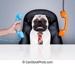 trabajador, perro, oficina, jefe