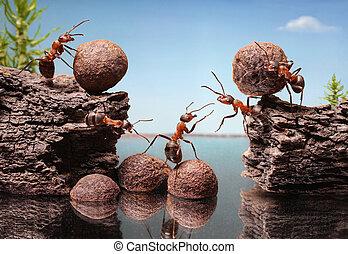 trabajo en equipo del equipo, hormigas, construir, dique